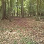 Bentheimer Wald