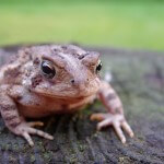 toad on a stump