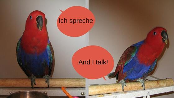 Ich spreche!