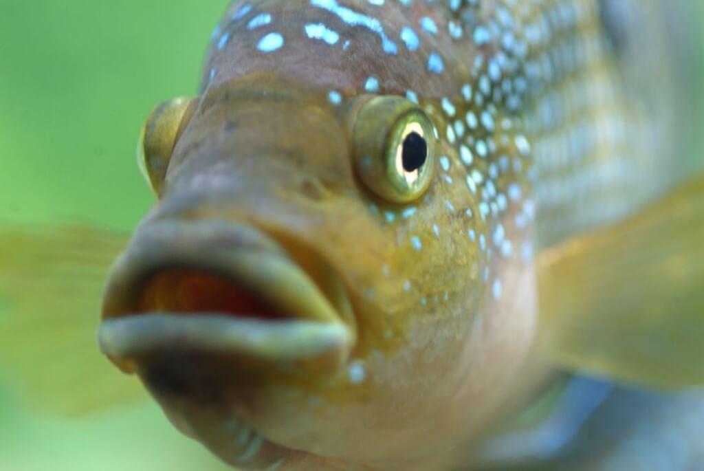 Das doofe Fischlied