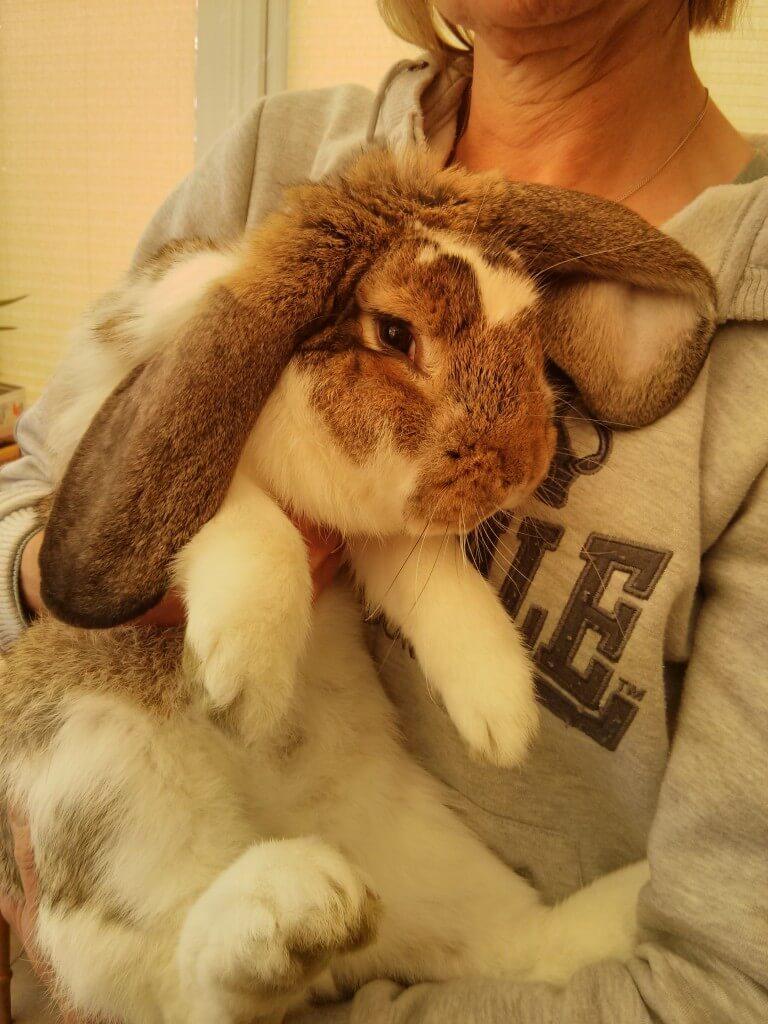 If rabbits could speak German