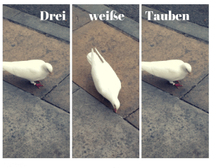 Three white pigeons - a German listening exercise